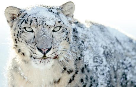 snow leopard wallpaper mac. OSX Snow Leopard desktop