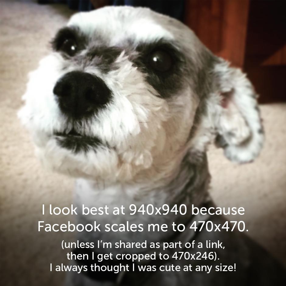 Social media image sizes